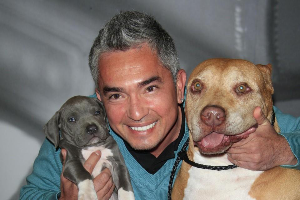 Cesar Millan is wereldberoemd door zijn aanpak van gedragsproblemen bij honden
