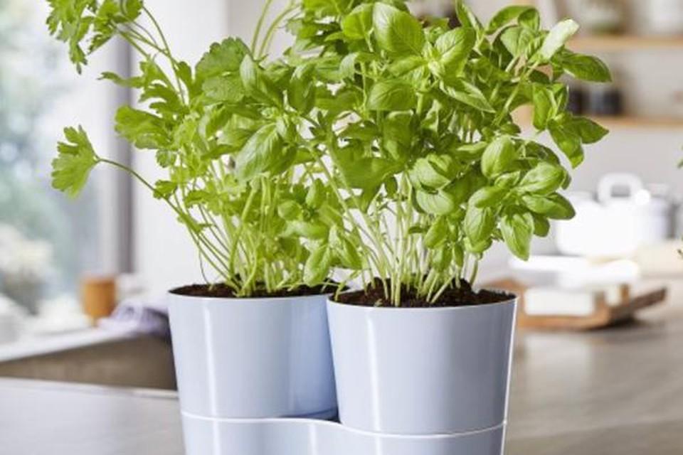Kruidenpot voor twee plantjes - Mepal - 14,99 euro