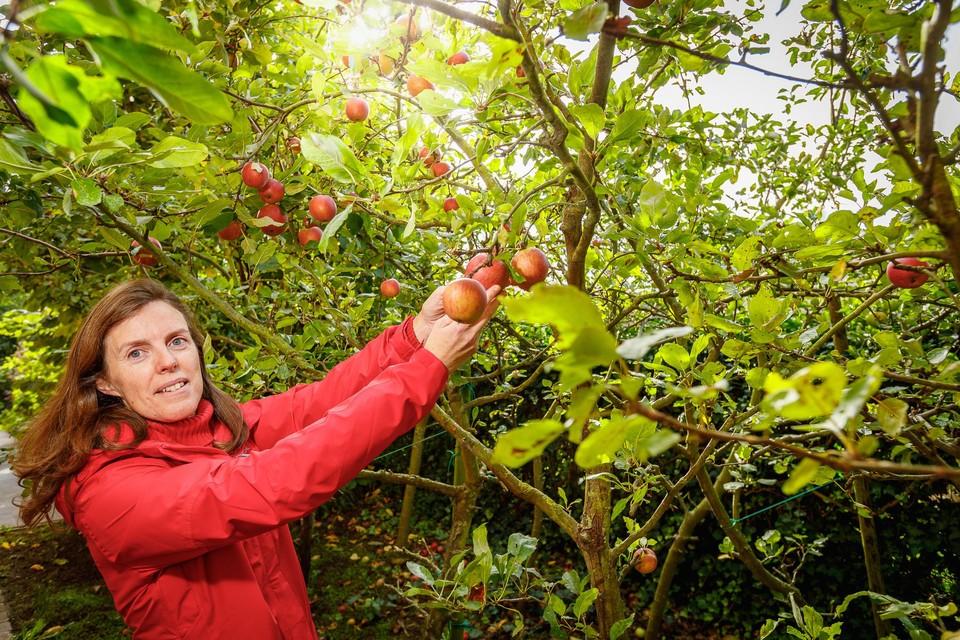 """Ilse Eelen uit Pijpelheide: """"Veel mensen denken dat een boom planten moeilijk is. Maar dat is echt niet waar. Je plant hem en hij groeit vanzelf. Een paar jaar later heb je schaduw en eventueel zelfs fruit. Geloof me: dat is pure luxe."""""""