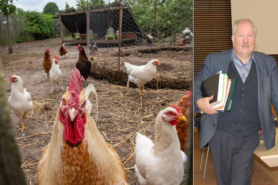 Burgemeester Van de Vijver van Beveren wil zo snel mogelijk weten of hij ook in zijn gemeente een beslissing moet nemen of burgers hun eieren nog mogen eten.