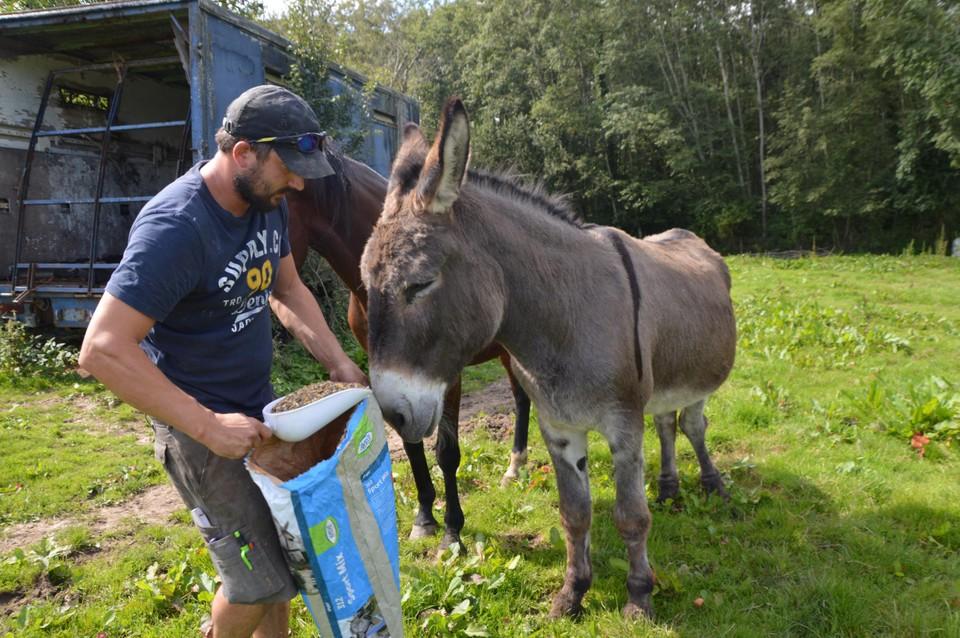 """Kaivin geeft de ezels nog wat eten uit een zak van Vlaamse donateurs op de wei. """"Het zijn bonbons voor hen, want er staat genoeg gras op de wei."""""""
