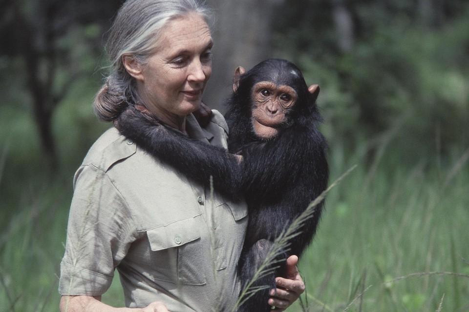 Jane Goodall: wat zij vroeger zelf deed, raadt ze nu af.